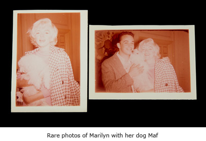 Rare photos of Marilyn with her dog Maf